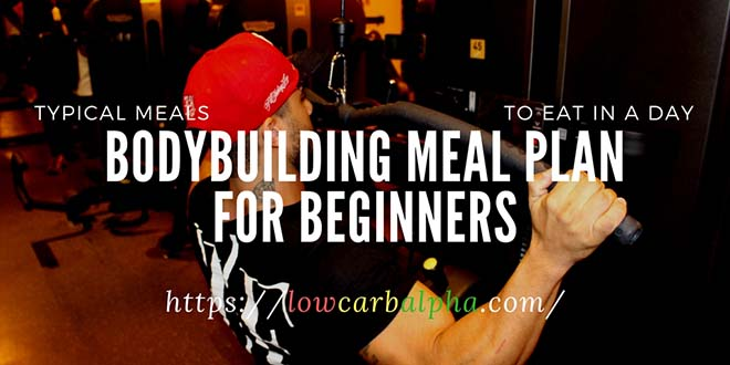 bodybuilding meal plan for beginners pdf